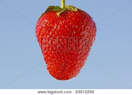 Strawberry Over Blue Sky