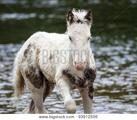Pony In River