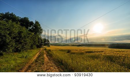 Trees And Sunset On Wheat Field