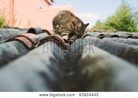 Cat On A Roof Outdoors
