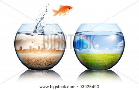 Global warming concept - goldfish jump from pollution to green