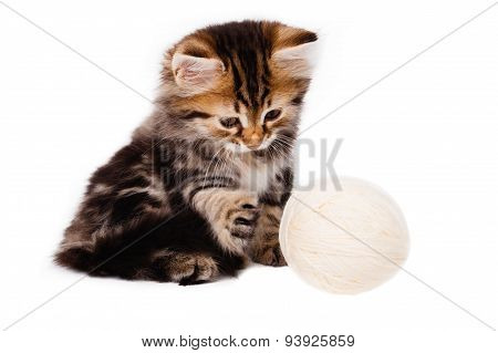 Funny Kitten Plays With Ball Of Thread On White Background