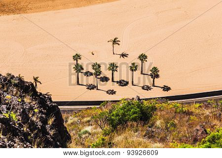 Aerial View To Palms On The Yellow Sand Beach
