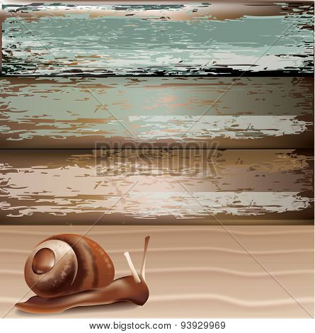 Snail On Sand With Wood Background