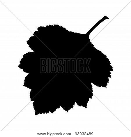 Silhouette leaves.