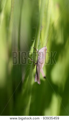 Beautiful Grasshopper On A Green Branch