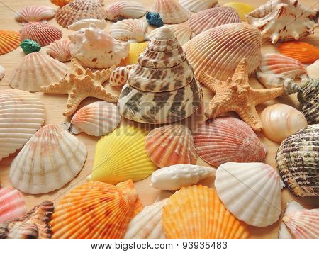 Bright colored sea shell background.