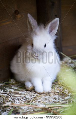 Funny Baby White Rabbit With A Carrot In Box