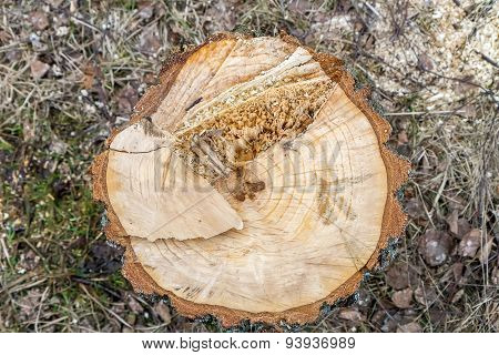 Cut Tree Stump From Top