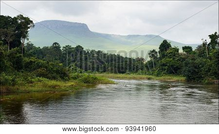 Small river in jungle.