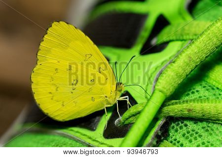 Close up of tiny butterfly with bright yellow wings