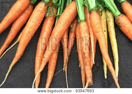raw fresh carrots with tails on natural background