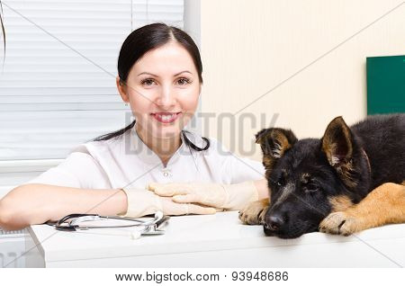 Puppy German Shepherd  and vet