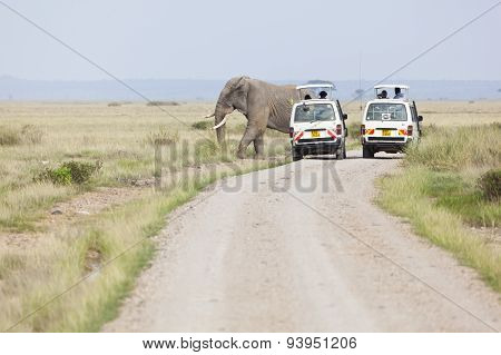 Safari Cars And Elephants, Editorial