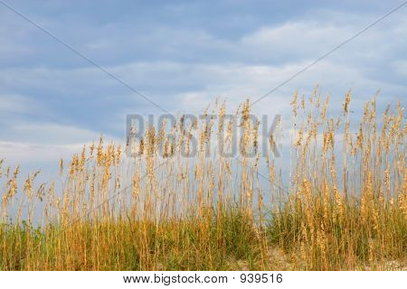 Seaoats Against Blue Cloudy Sky