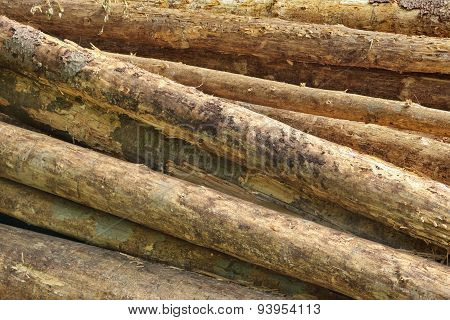 Big Pine Wood Logs In Woodpile Background Texture
