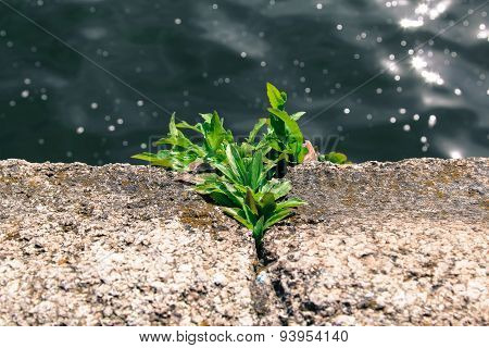 Plant on the stone.