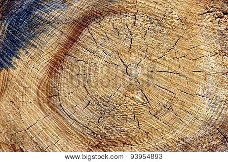 Close-up Of Old Pine Tree Rough Cross Section Background Texture