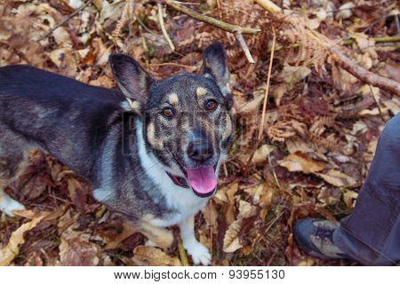 Mixed breed dog.