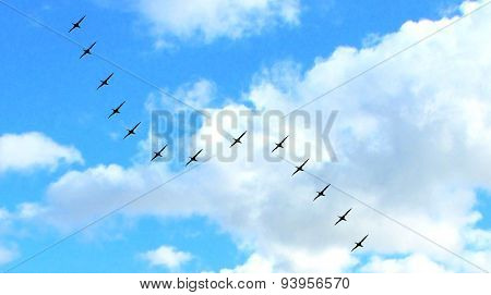 formation of a flock of birds