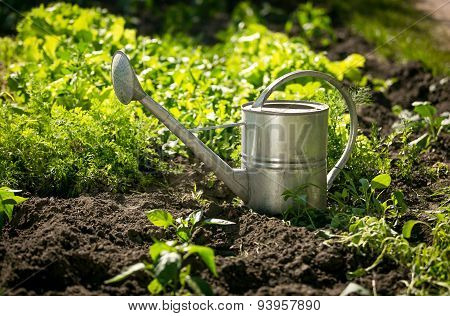 Stainless Watering Can On Garden Bed With Growing Lettuce