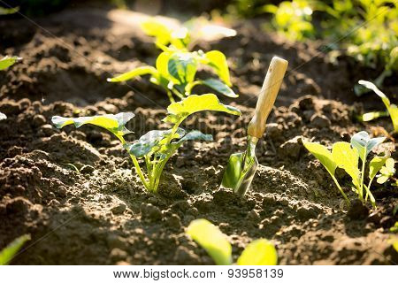 Closeup Shot Of Spade In Garden With Small Sprouts