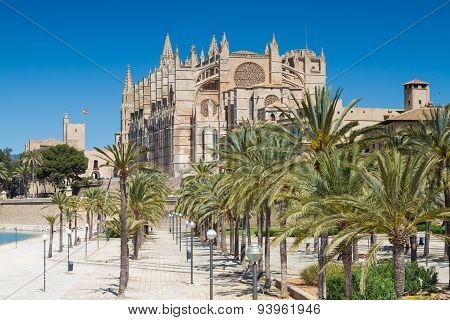 Palms In Front Of La Seu Cathedral