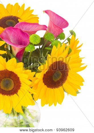one bight sunflower