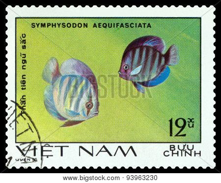 Vintage  Postage Stamp. Symphysodon Aequifasciata.