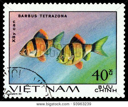 Vintage  Postage Stamp. Barbus Tetrazona.
