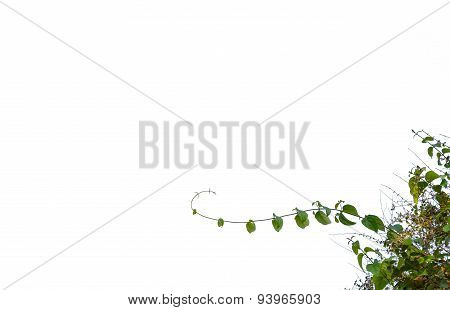 Green Leaves Isolated, Foreground Useage