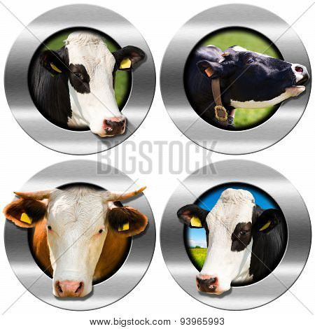 Round Symbols With Heads Of Cows