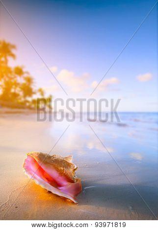 Art Shell On The Tropical Beach