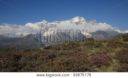 Snow Capped Kongde Ri And Meadow Full Of Pink Wildflowers