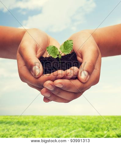 fertility, environment, ecology, agriculture and nature concept - closeup of woman hands holding plant in soil over blue sky and grass background