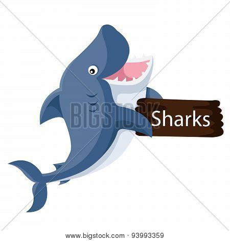 Illustrator of shark