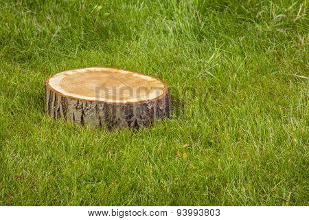 Stump tree plant on green grass field