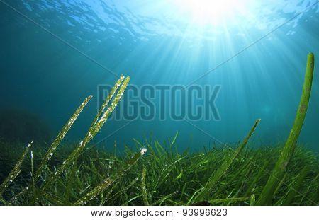 Underwater and green seaweed