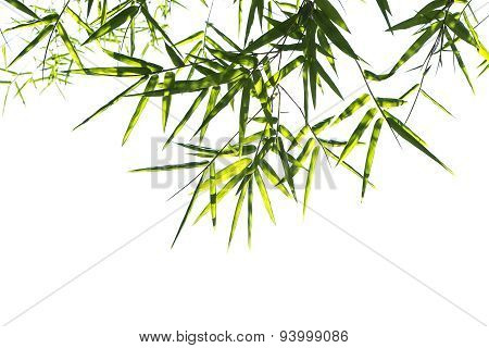 Bamboo Leaves Isolated On White.
