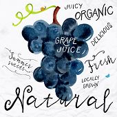 picture of grape  - Vector illustration of watercolor grapes - JPG