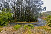 image of tree lined street  - Eucalyptus trees line a wet road with fog in the background  - JPG