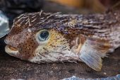 picture of jamaican  - Exotic jamaican fish just catching in the sea - JPG