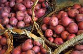 image of solanum tuberosum  - Baskets full of fresh new potatoes locally grown in Florida - JPG