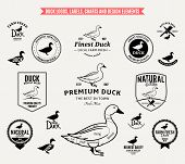 pic of duck  - Lots of vector duck design elements for your work - JPG