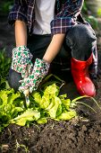 picture of spade  - Young woman in gloves working in garden with metal spade - JPG