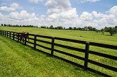 image of bluegrass  - Kentucky Bluegrass Region - JPG