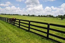 foto of mile  - Kentucky Bluegrass Region - JPG