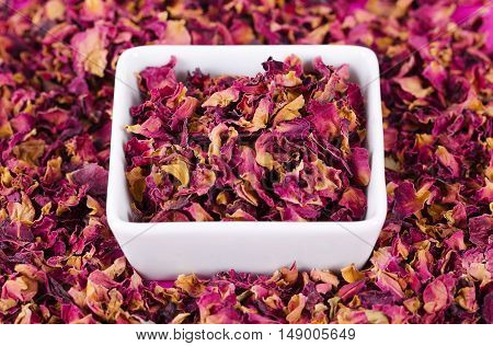 Rose petals in a white bowl surrounded by more petals. Dried blossoms, used for perfumes, cosmetics, teas and baths. Purple and orange colored organic herb. Isolated macro photo close up from above.