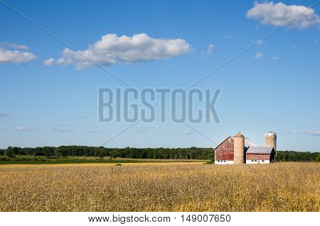 Classic rural farm scene with a weathered red barn silos golden crops and a blue sky. Fluffy clouds and copy space in sky if needed.