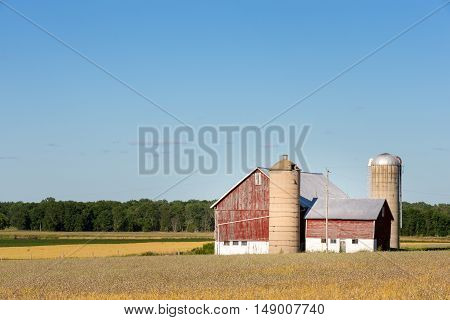 Classic rural farm scene with a weathered red barn silos golden crops and a blue sky. Copy space in sky if needed.